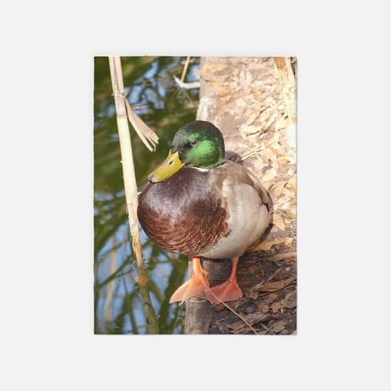 Mallard Duck 5'x7'Area Rug