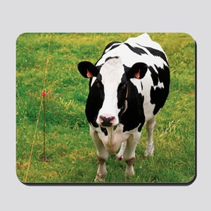 Holstein dairy cattle Mousepad