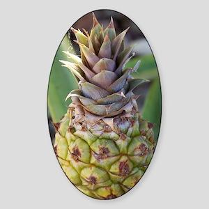Baby Pineapple Sticker (Oval)