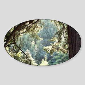 view-through-trees-horiz-short Sticker (Oval)