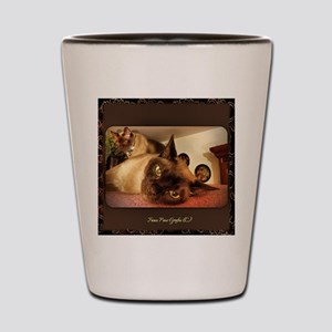 Burmese Cat portrait Shot Glass