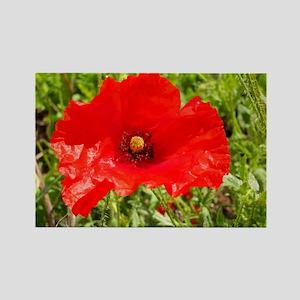Red Poppy Flower Style 2 Rectangle Magnet