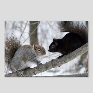 Black Squirrel Postcards (Package of 8)