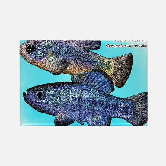 Death Valley Pupfish Rectangle Magnet
