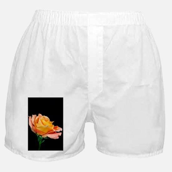 A Single Orange Rose Boxer Shorts