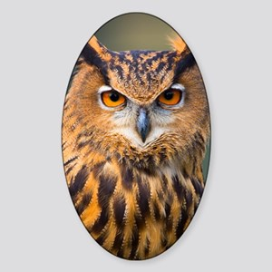 Eagle Owl Sticker (Oval)
