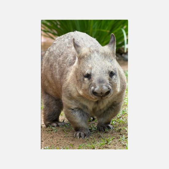 Common wombat - vombatus ursinus Rectangle Magnet