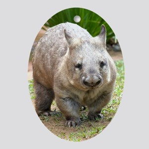 Common wombat - vombatus ursinus Oval Ornament