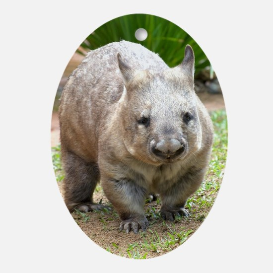 Common wombat - vombatus ursinus Oval Ornament