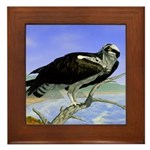 Osprey: Framed Tile