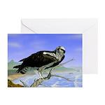 Osprey: Greeting Cards (Pk of 10)