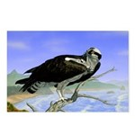 Osprey: Postcards (Package of 8)