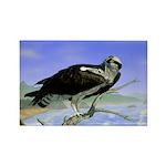 Osprey: Rectangle Magnet (100 pack)