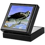 Osprey: Keepsake Box