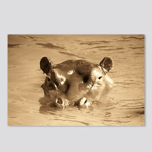 River Hippo Postcards (Package of 8)