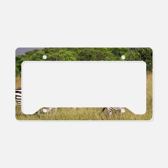 Africa Zebra Herd License Plate Holder