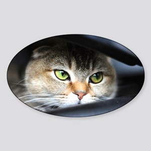 noodles the cat bright green eyes - Sticker (Oval)