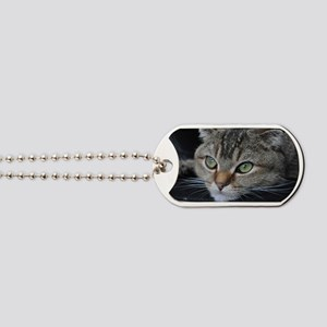 Noodles the cat thinking about you - post Dog Tags