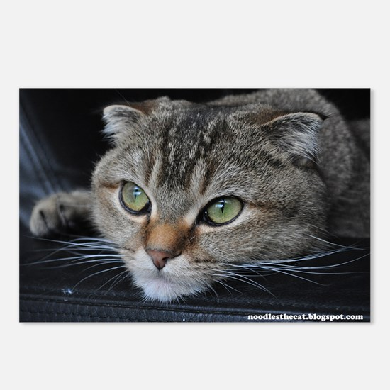 Noodles the cat thinking  Postcards (Package of 8)