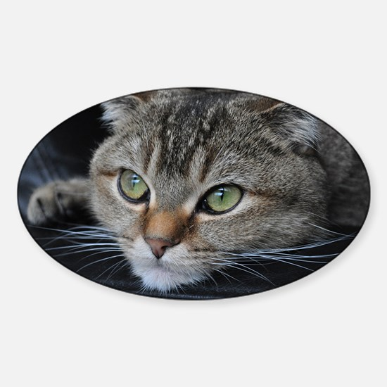Noodles the cat thinking about you  Sticker (Oval)