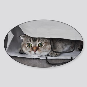 Noodles the cat bag - postcard (8) Sticker (Oval)