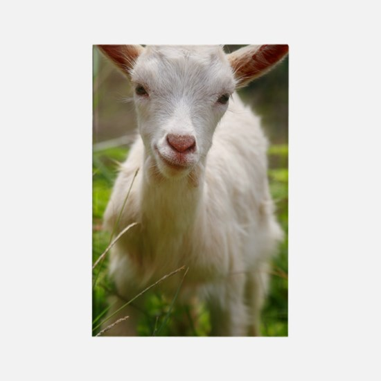 Baby goat Rectangle Magnet