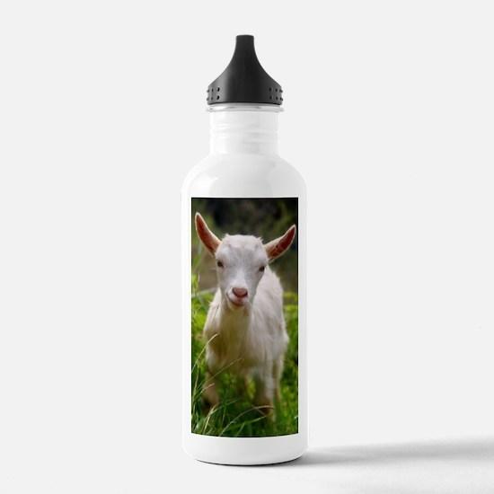 Baby goat Water Bottle