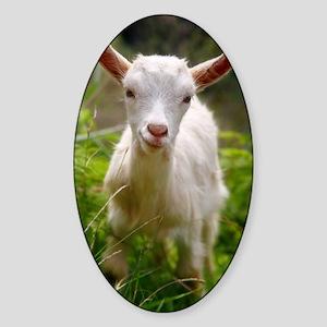 Baby goat Sticker (Oval)