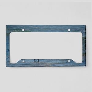 Snowy egret License Plate Holder