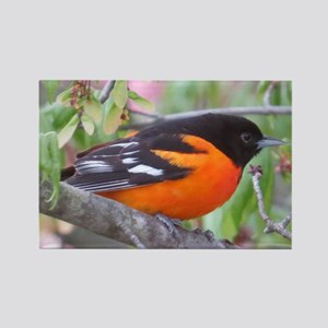 Baltimore Oriole Rectangle Magnet