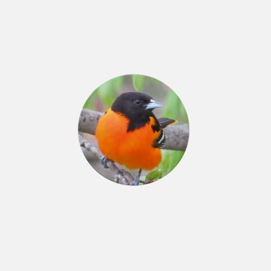 Baltimore Oriole Mini Button