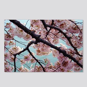 Pink Cherry Blossoms Postcards (Package of 8)