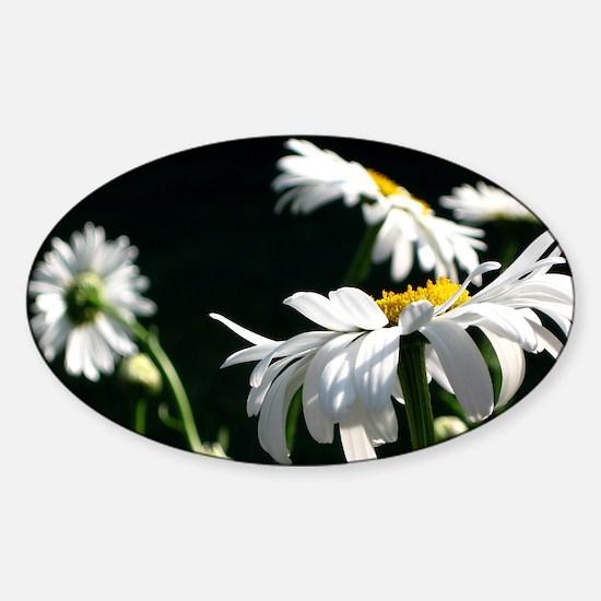Daisy Dream Sticker (Oval)