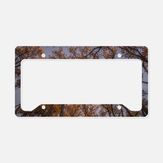 Fall in Albuquerque License Plate Holder