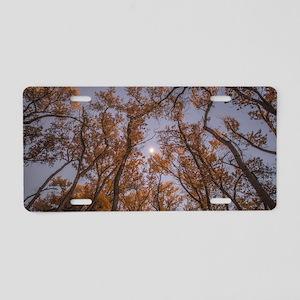 Fall in Albuquerque Aluminum License Plate