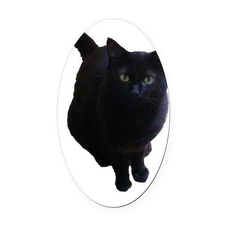 Black pussy cats