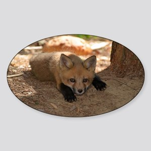 kit looking at me Sticker (Oval)