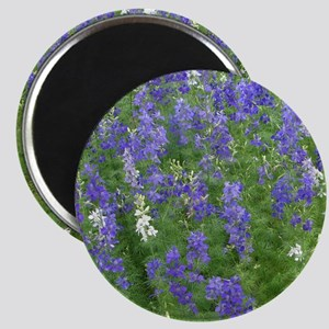 Texas Bluebonnets in Bloom Magnet