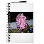 Snow Hyacinth Journal