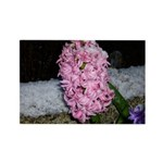 Snow Hyacinth Rectangle Magnet (10 pack)