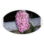Snow Hyacinth Oval Sticker