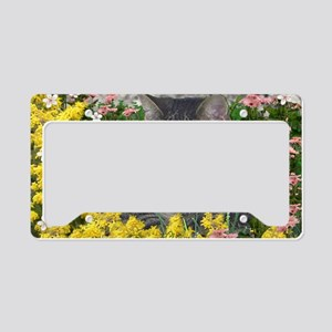 Mimosa the Tiger Cat in Mimos License Plate Holder