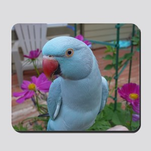 Indian Ringneck Parakeet Closeup Mousepad