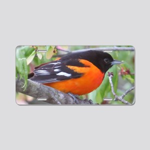 Northern Oriole Aluminum License Plate