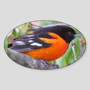 Northern Oriole Sticker (Oval)