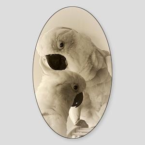 Cockatoo Pals Sticker (Oval)