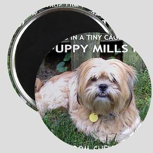 Dusty - Puppy Mill Survivor Magnet