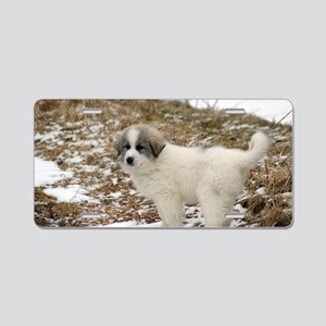 Great Pyrenees Puppy Aluminum License Plate