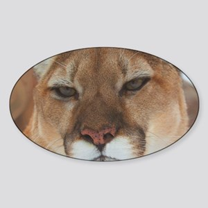 Big Face Animal - Panther Sticker (Oval)