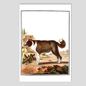 Dog (Icelandic Sheepdog) Postcards (Package of 8)